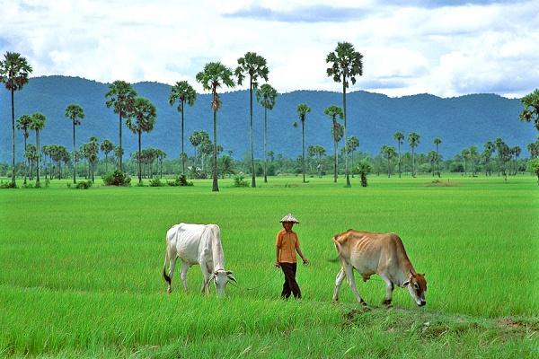 Potret Petani di wilayah Kamboja Selatan